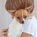 Child Holding Dog in Santa Rosa or Rohnert Park