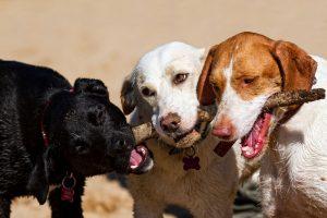 Doggie Day Care in Santa Rosa and Rohnert Park