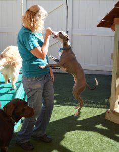 Trainer Teaching A Dog Tricks