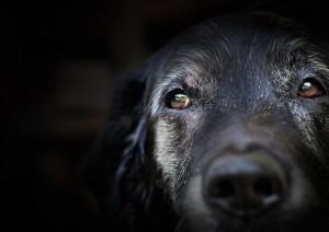 sweet-dog